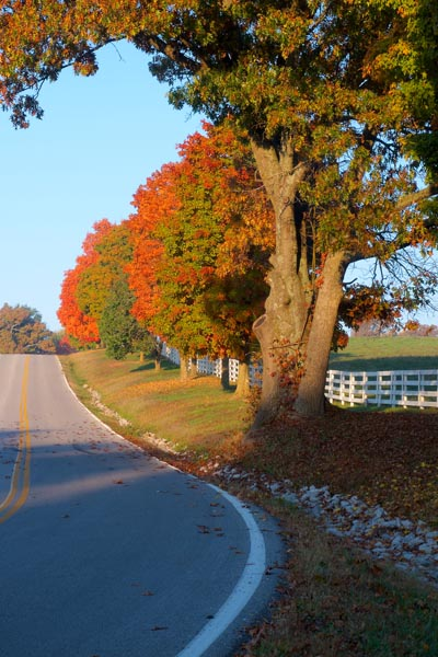 road;highway;scene;autumn;fall;trees