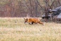 current-river;se-mo;mo;missouri;ozarks