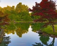 nature;water;green;japanese-garden