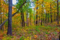 nature;ozarks;trees;autumn;fall;color