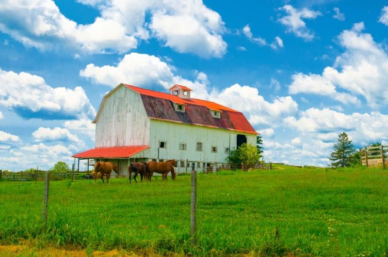 Barn;barns;farm;horses;animals;green;red;white;ohio;Midwest;rural