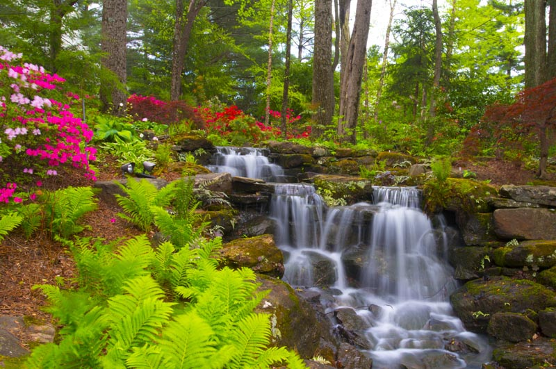 Flowers;Flower;Indiana;Spring;Spring Flowers;Pink;Green;Woods;White;Red;Gibson County;Pink;Waterfall;Waterfalls