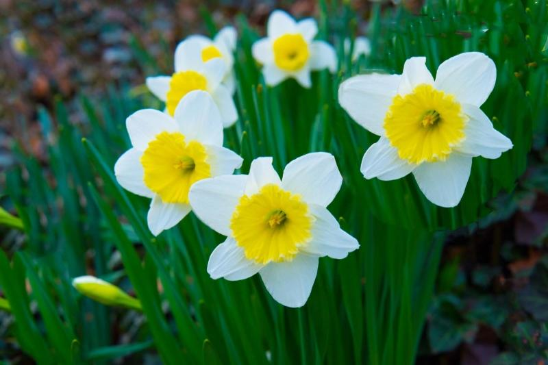 Flowers;Spring Flowers;White;Yellow;Howard County;Indiana;Macro;Flora;Nature
