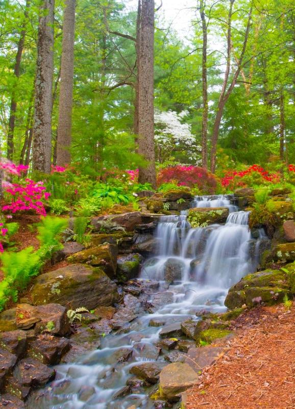 Floweres;spring flowers;pink;green;Azalela Walk;Gibson County;nature;Indiana;Midwest;Watertfall:vertical