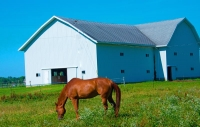 Farm;Barn;Horse;Animal;Indiana;white;brown;Midwest