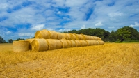 Farm;Farming;Farms;Grain;Crops;Wheat;Harvest;Wheat-Straw-Bails;Round;Round;Round-Bails;Hay;Gold;Gree