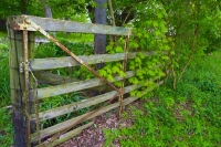 Farm;farming;gate;antique;old;green;gray;Indiana;Midwest;Hamilton-County