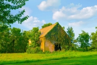 Barn;farm;vine;Howard-County;Green;Midwest;rural;antique;old;Indiana