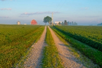 Road;country-road;Indiana;Midwest;rural;barn;farm;field;peaceful;morning;Miami-County
