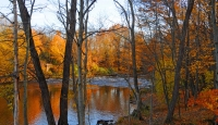 Fall-Colors;Yellow;orange;gold;reflection;river;stream;New-York;North-East;East-Coast;fall-folage