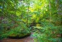 Bridge;Bridges;Stone-Bridge;Indiana;Turkey-Run;Midwest;Green;Gray;Woodland;Nature;Moss;Trees