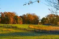 Fall-Colors;Orange;Fields;Farm;Trees;Fall;Howard-County;Midwest;Rural;Indiana