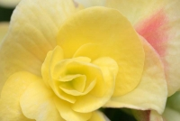 Flowers;flora;yellow;Indiana;Midwest;nature;Howard-County;Macro
