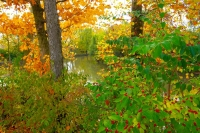 Indiana;Midwest;rural;Fall-Colors;Fall-leaf-color;orange;fence;white;beauty;peaceful;Green;Howard-Co