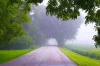 Road;Country-Road;fog;green;Howard-County;Midwest;rural;Indiana