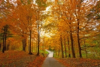 Fall-Colors;Orange;green;Howard-County;Trees;Leaves;Indiana;Midwest;Fall;bridge;nature