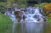 Waterfall;flowers;yellow;green;Hamilton-County;Indiana;Midwest;Reeds;stream;movimg-water