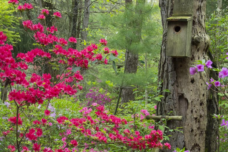 Flowers;Flower;Indiana;Spring;Spring Flowers;Pink;Green;Woods;White;Red;Gibson County;Birdhouse;Midwest