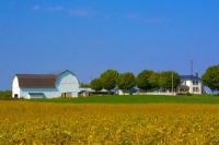 Farm;Farms;Family-Farm;Barn;Barns;Rural;Gold;green;blue;white;Indiana;Grant-County;Midwest;Crops
