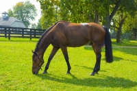 Horse;brown;Kentucky;Lexington;KY;Animal