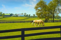 Horses;Barns;Pastures;farm;Kentucky;green;Kyfence