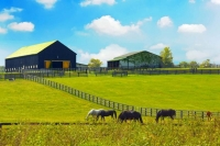 Horses;Barns;Kentucky;green;Lexington;Midwest