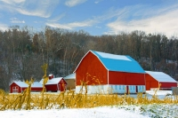 Barn;Farm;Snow;Corn-field;rural;Wisconsin;Eau-Clair;Midwest;Red;white;gold