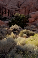 Moab;Arches-National-Park;vertical;southwest;desert