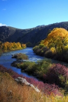 blue;yellow;vertical;trees;water;landscape;river;stream;fall;Rocky-Mountains;colorado