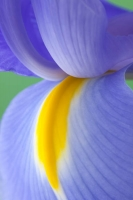 flower;flora;abstract;flowers;nature;color;violet;yellow;blue;vertical