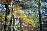 nature;busiek-state-park;ozark;branson;mo;missouri;fall;foliage;trees;color;autumn;horizontal