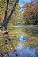 nature;busiek-state-park;ozark;branson;mo;missouri;fall;foliage;trees;color;autumn;vertical;reflecti