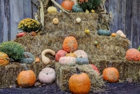 nature;pumpkins;fall;autumn;early-fall