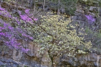 dogwood-canyon;mo;missouri;nature;lampe