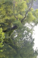 water;spring;bennett-spring-state-park;river;reflection;trees;red;yellow;blue;vertical;missouri;mo;l