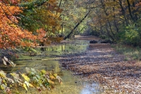 water;Busiek-state-park;river;reflection;trees;green;missouri;mo;ozark;fall;autumn;colors;horizontal