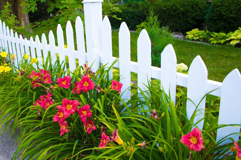 Flowers;Red;rust;orange;green;Indiana;Howard County;flora;Nature;Picket Fence;white