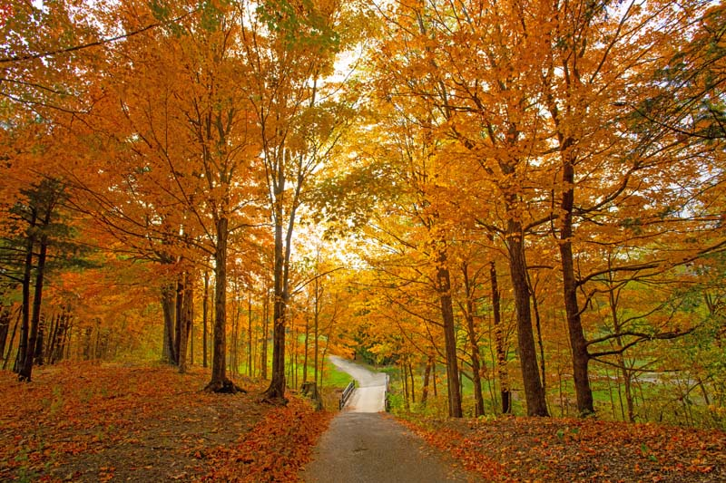 Fall Colors;Orange;green;Howard County;Trees;Leaves;Indiana;Midwest;Fall;bridge;nature