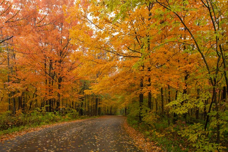 Fall Colors;Orange;green;Hamilton County;Trees;Leaves;Indiana;Midwest;Fall;Nature;Country Road