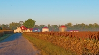Farm;Red;Earth-Tone;Brown;indiana;Midwest;mist;sun-rise;country-road;rural
