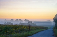 Road;Country-Road;Sunrise;fog;gold;Fulton-County;Midwest;Rural;Indiana