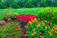 Wagon;red;flowers;orange;green;Howard-County;flora;Indiana;Midwest;art