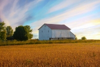 Barn;Tipton-County;white;crops;bean-field;Indiana;sunrise;rural;farming;farm