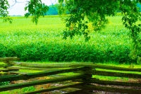 Fence;farm;green;split-rail-fence;Indiana;Midwest;Howard-County;rural
