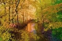 Leaves;Fall-Colors;Indiana;Midwest;Howard-County;red;orange;yellow;nature;stream