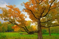 Leaves;Fall-Colors;Indiana;Midwest;Howard-County;red;orange;yellow
