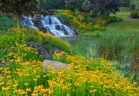 Waterfall;flowers;yellow;green;Hamilton-County;Indiana;Midwest;Reeds;stream;movimg-water;nature