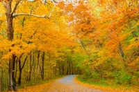 Road;Country-road;fall;leaves;orange;yellow;Carrol-County;Indiana;Midwest;fall-colors