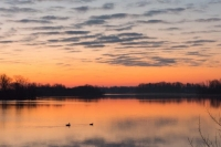 Sunrise;geese;animals;nature;Lake;Howard-County;gold;yellow;blue;Indiana;Midwest