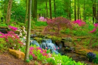 Flowers;Flower;Indiana;Spring;Green;Woods;Gibson-County;pink;Midwest;Waterfall;waterfalls